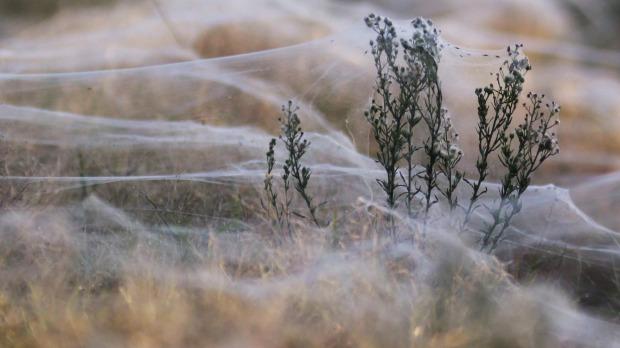 Wagga Wagga. Photo: Reuters