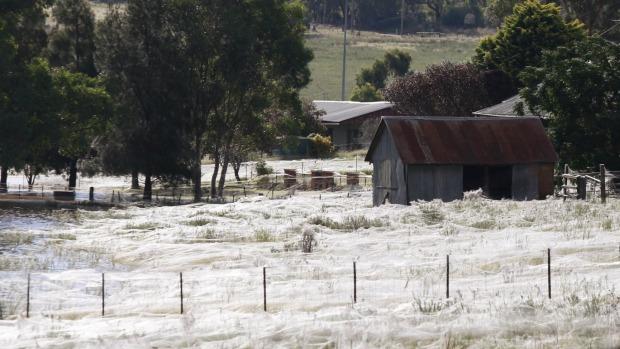 Wagga Wagga em 2010